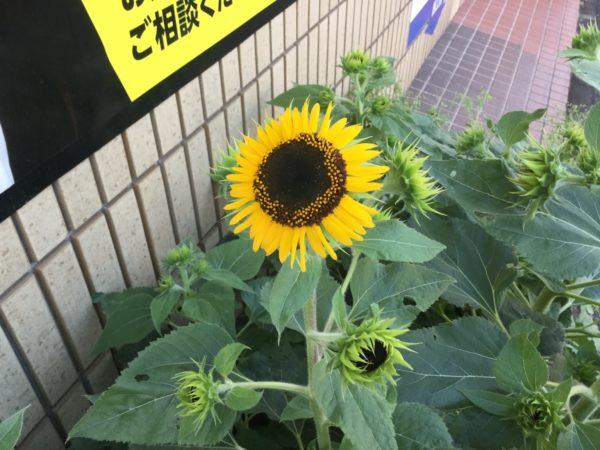 川崎市中原区 元住吉 賃貸 リノベーション モトスミグッドリノベーション らくらくライフ