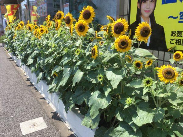 川崎市中原区 元住吉 賃貸 リノベーション らくらくライフ モトスミグッドリノベーション ひまわり